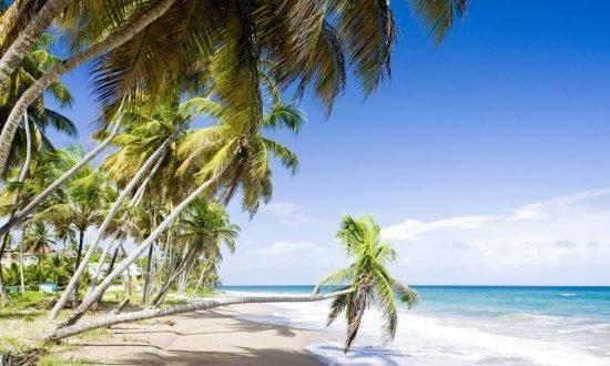 grenada palm tree touching the water