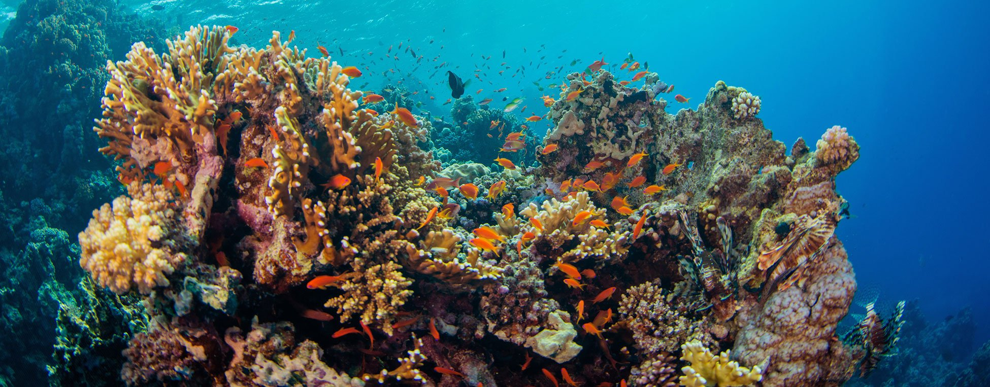 Seychelles coral reef