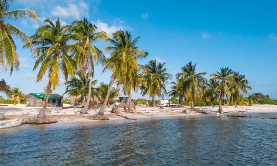 Cuba beach with palms